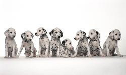 Veterinaria, Emoción y Cognición en los Perros